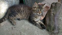 pierdut pisicuta constanta km 4-5