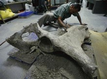 Elefant de 8 milioane de ani in Abu Dhabi