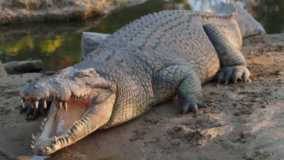 """Crocodilul din """"Stăpânul Inelelor""""?"""