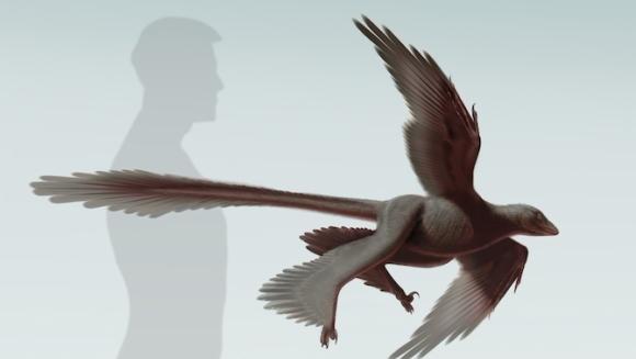 Pasărea cu patru aripi sau dinozaurul avion