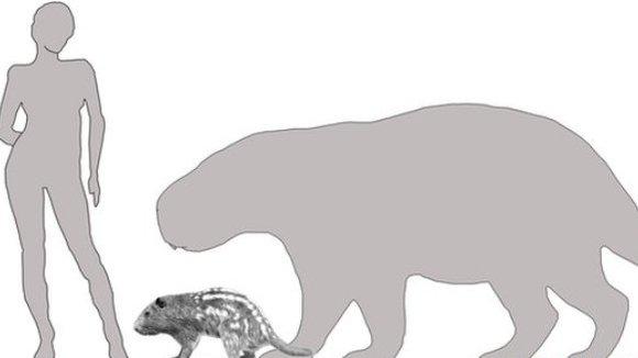 Cel mai mare rozător avea incisivii mai puternici decât ai tigrilor