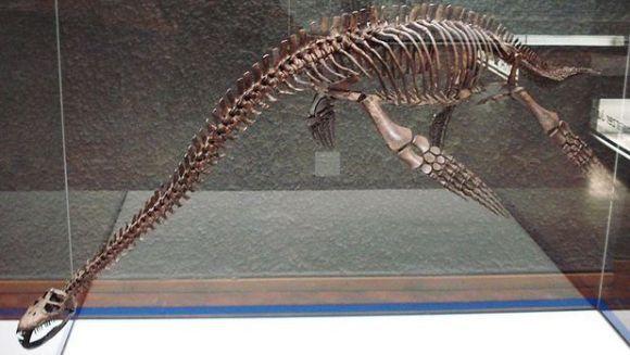 O nouă specie de reptilă marină, descoperită în Rusia