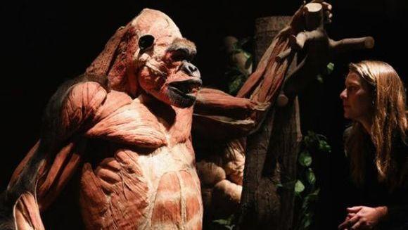 """Expoziţie controversată cu animale disecate şi plastifiate, realizată de creatorul """"The Human Body"""". VIDEO"""