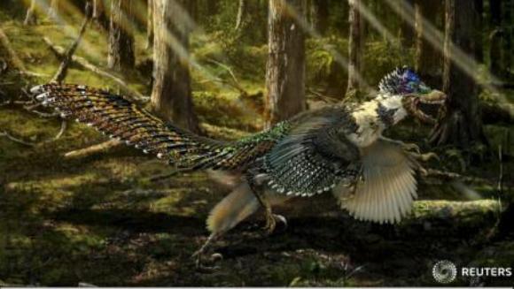 Fosila unui mare dinozaur cu pene, descoperită în China