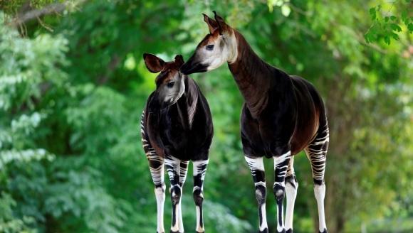 5 animale pe care ai putea să le confunzi cu ușurință cu personaje fantastice