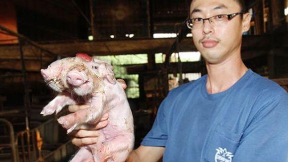 Un porc cu două râturi?