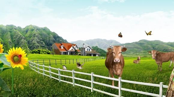 Vacile sunt inteligente - 10 motive pentru a iubi văcuţele