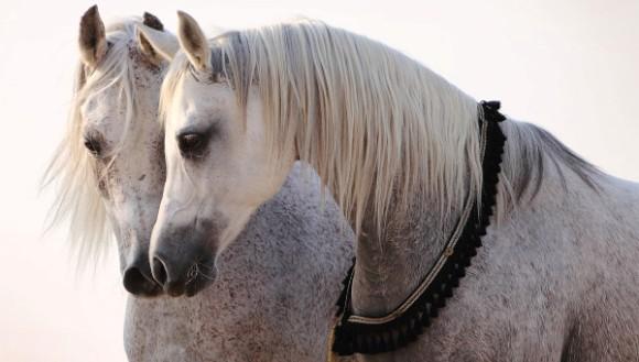 Noi mijloace de comunicare folosite de cai