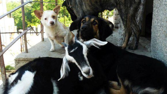 Sanctuarul în care animalele abuzate se îngrijesc reciproc... Galerie Foto