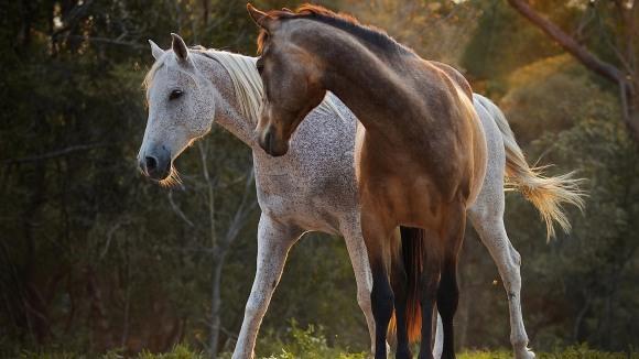7 fapte care ne dovedesc că animalele au sufletul mai mare decât am crede