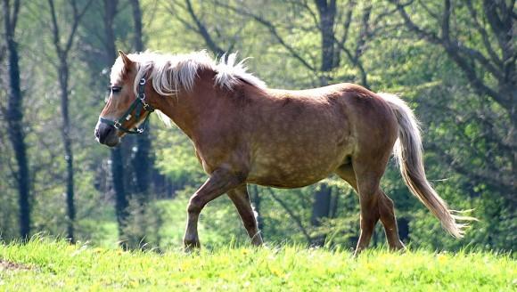 Diareea la cai – cauze, simptome, diagnosticare şi tratament