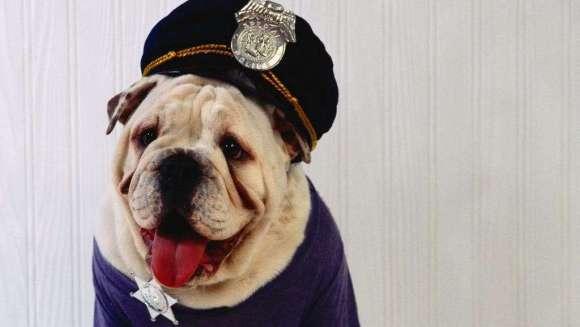 Câinii eroi: 5 poveşti impresionante