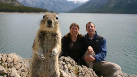 Când animalele iubesc fotografia: top 10 cele mai amuzante imagini