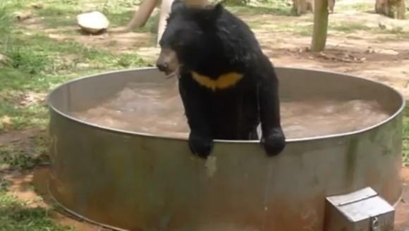 Puiul de urs care ne învaţă să ne bucurăm de plăcerile vieţii