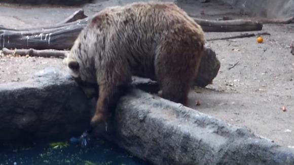 VIDEO impresionant: un urs salvează o pasăre de la înec