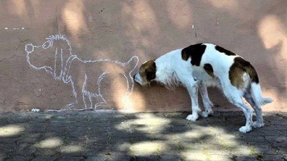 Câinele potrivit, la locul potrivit... GALERIE FOTO