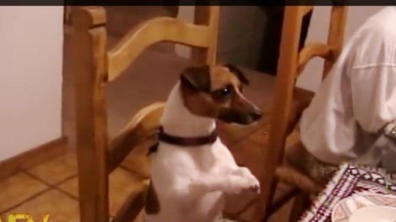 Căţeluşul care spune rugăciunea înainte de masă - VIDEO