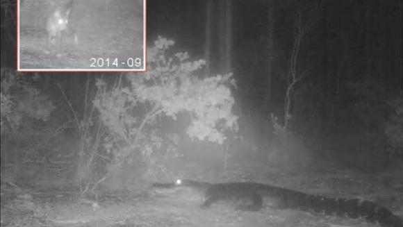 Curiozitatea a lăsat pisica doar cu opt vieți - Video