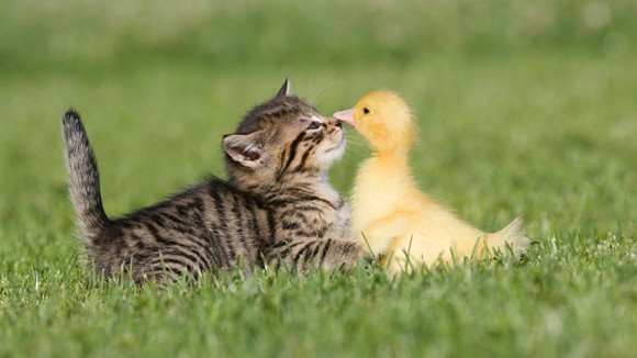 Prietenii adorabile între animale  - Galerie Foto