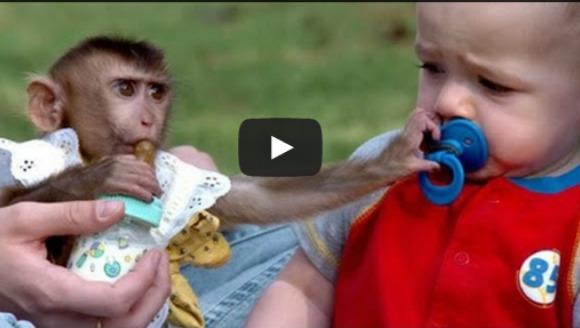 Maimuţe amuzante şi neastâmpărate. Cele mai tari momente