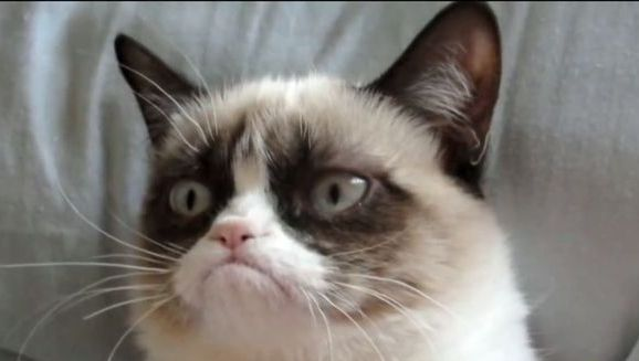 Grumpy Cat, mai bogată decât Nicole Kidman, Cameron Diaz sau Matthew McConaughey.