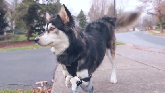 Printatul 3D – o nouă şansă la viaţă pentru un căţel
