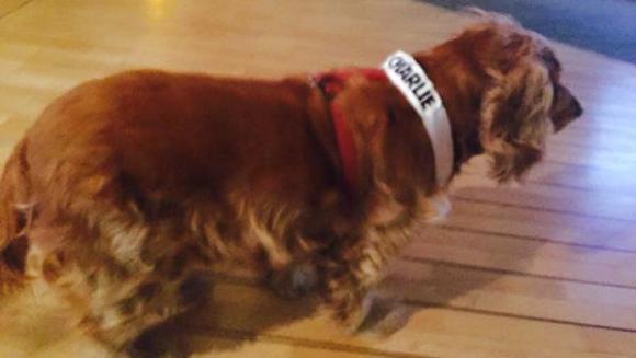 Lila, câinele care a supravieţuit atacului de la Charlie Hebdo, a devenit mascota revistei