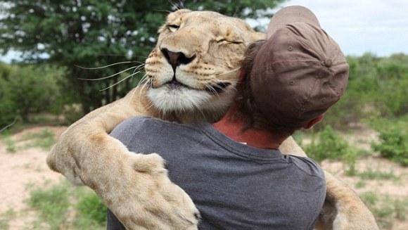 Cum îi mulțumește un leu salvatorului? Video extrem de emoționant