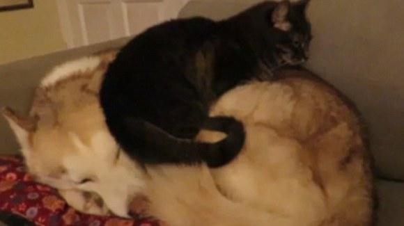 Un pat confortabil? Cățelul pufos, desigur! VIDEO