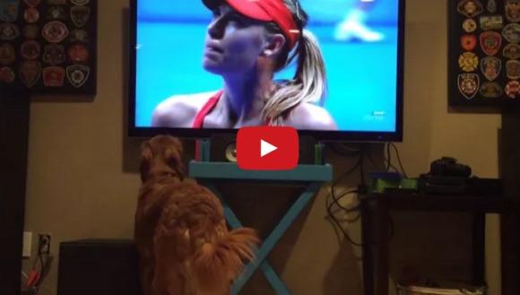 Cel mai înfocat fan al tenisului. Cum reacționează la meci