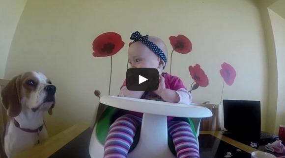 Cățelul - dădacă: a doua mămică pentru un copilaș