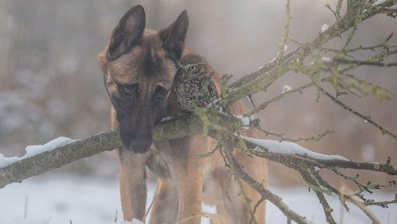 Prietenia neobișnuită dintre un câine și o bufniță – Galerie Foto