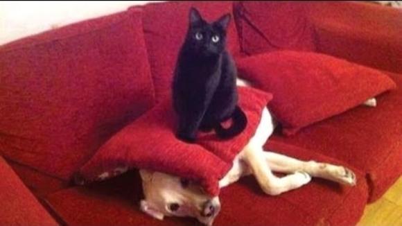 Pisici neastâmpărate care nu lasă cățeii să trăiască – VIDEO