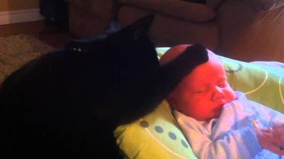 Momentul dulce al săptămânii: pisicuța care adoarme bebelușul - VIDEO