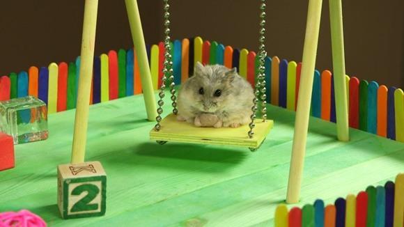 Ce se întâmplă când un hamster primește un parc de distracții, special creat pentru el? VIDEO