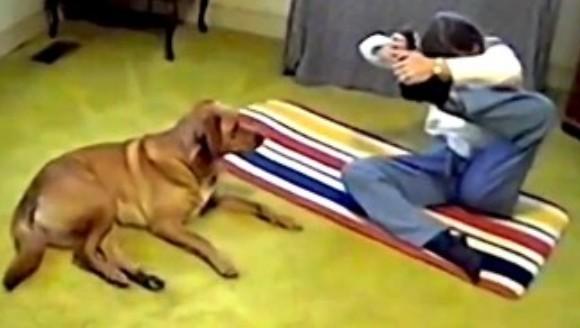 Ți-e greu să stai în această poziție dificilă de yoga? Lasă că te învață patrupedul  VIDEO