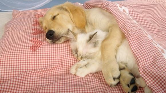 Animăluțele somnoroase și prietenii lor neobișnuiți. Imagini care ne topesc inima - Galerie Foto