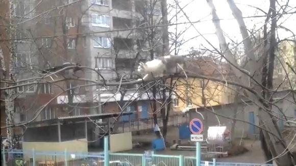 Pisica și cioara - fugăreala din copac. VIDEO