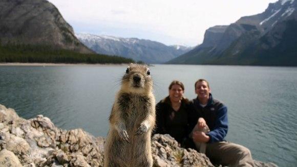 Top 10 cele mai amuzante fotografii cu animale, dintotdeauna - Galerie Foto