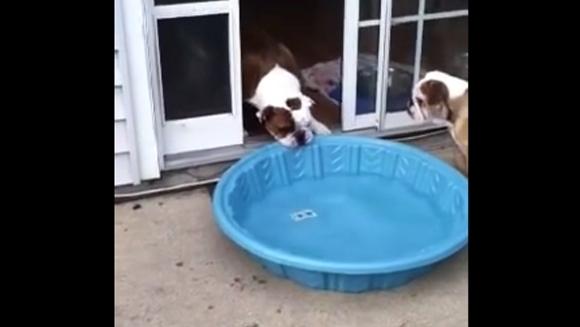 Cel mai ambițios câine din toate timpurile: vrea să își mute pisicina în casă și face totul pentru asta  - Video