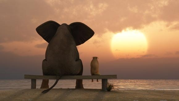 10 animale care împart aceeași dorință ascunsă: să fie căței! – VIDEO