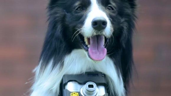 Primul câine fotograf din lume. Cum imortalizează momentele care îi plac – Galerie foto și VIDEO