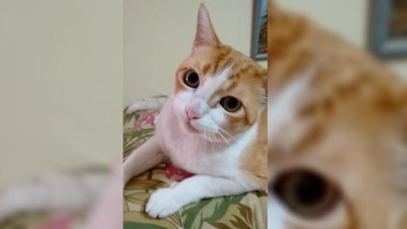 Reacția pisicii când ascultă cântecul ei preferat? De-a dreptul hilară – VIDEO