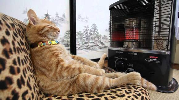 Animăluțe care iubesc căldura mai mult decât orice lume – FOTO