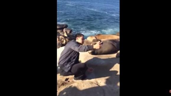 Vrea să își facă un selfie cu leul de mare, dar animalul are alte planuri - VIDEO