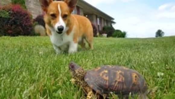 Când un câine vede în premieră o țestoasă... VIDEO