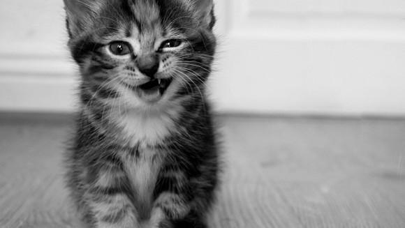 15 pisici care au dat greș în cel mai hilar mod - Galerie Foto