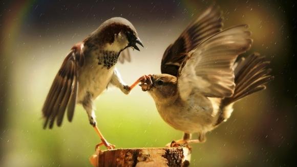 13 păsări care iubesc să fie nesuferite  - Galerie foto