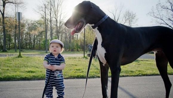 Cei mai frumoşi câini mai mari decât oamenii lor – Galerie foto