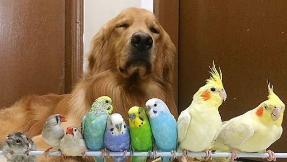 Cea mai tare gaşcă: un câine, opt păsări şi un hamster sunt cei mai buni prieteni din lume - Galerie Foto
